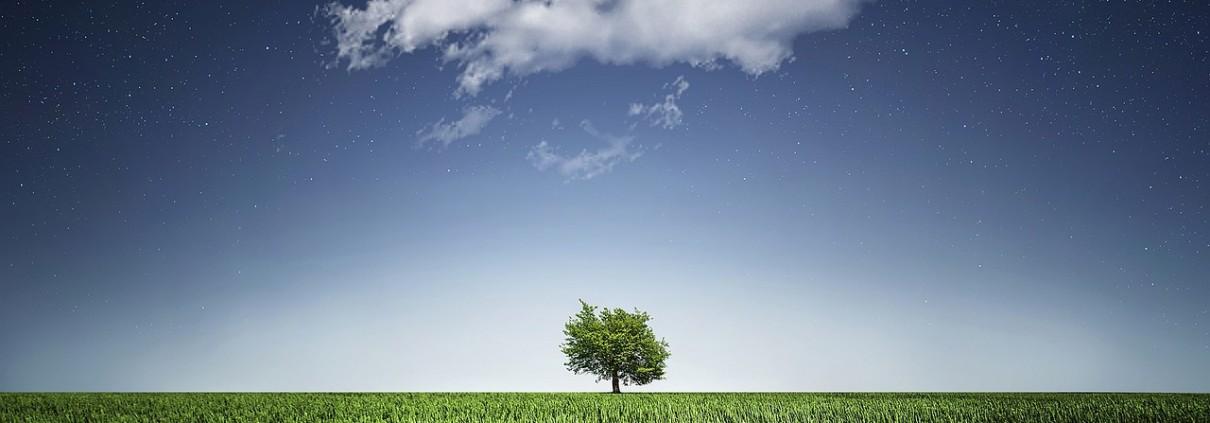 Los 7 propósitos ecológicos de 2017