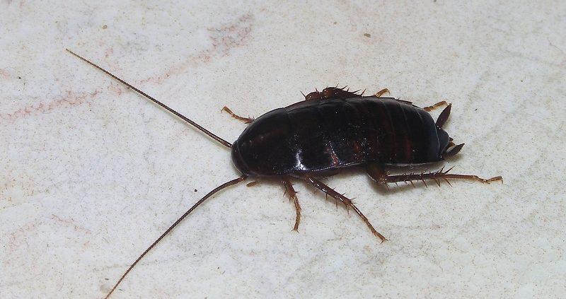 Stop Cucarachas