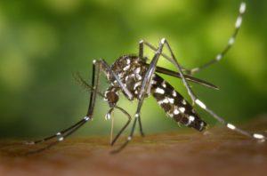 Cómo combatir los insectos con éxito