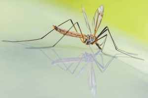 Picaduras de mosquitos