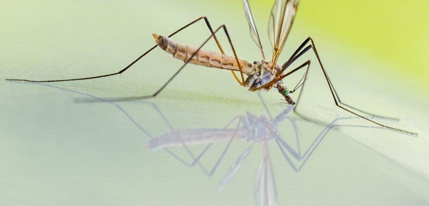 Por qué me pican tanto los mosquitos